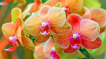 Как выращивать орхидеи: 8 простых советов для новичков