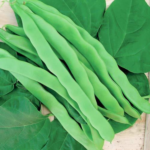 Фасоль овощная Сахарная лопатка Седек изображение 1 артикул 71732