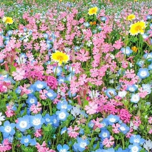 Газон цветущий Цветущий город, смесь окрасок Русский огород НК изображение 1 артикул 69871
