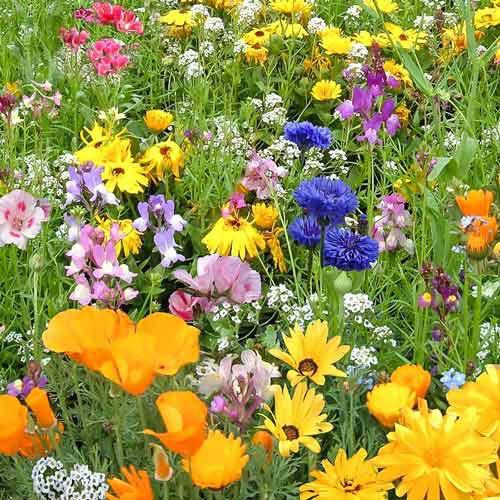 Газон цветущий Детская лужайка, смесь окрасок Русский огород НК изображение 1 артикул 69863