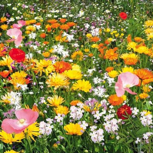 Газон цветущий Душистый луг, смесь окрасок Русский огород НК изображение 1 артикул 69865