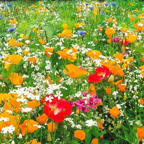 Газон цветущий Гольф Аристократ, смесь окрасок Русский огород НК изображение 1 артикул 69862