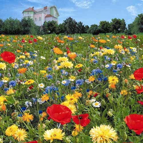 Газон цветущий Инстант Гарден, смесь окрасок Русский огород НК изображение 1 артикул 69866
