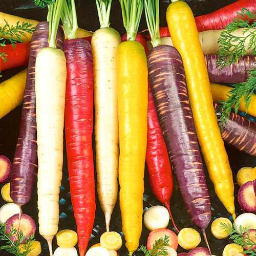 Морковь Чаровница радужная Седек изображение 1 артикул 71624