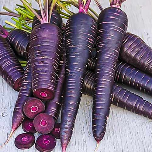 Морковь Майами шоколадная F1 Седек изображение 1 артикул 71622