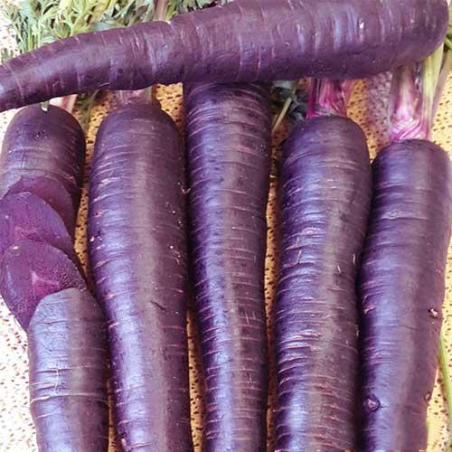 Морковь Пурпур F1 изображение 1 артикул 65345