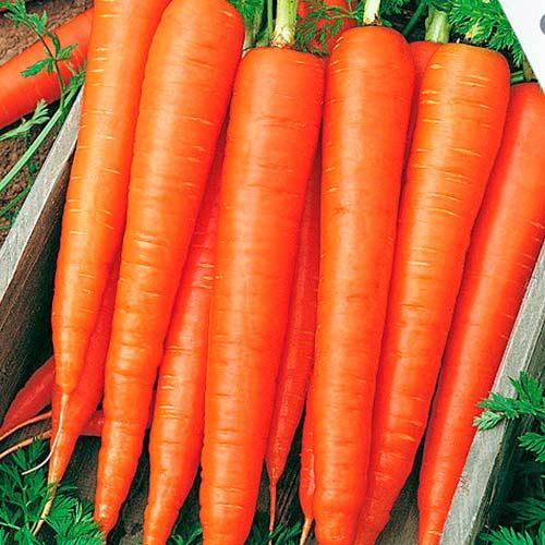 Морковь Санькина любовь F1 Уральский дачник изображение 1 артикул 74184