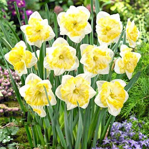 Нарцисс сплит-корона Принтал изображение 1 артикул 67657