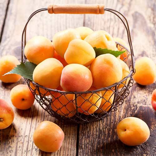 Персик-абрикос Медовый месяц изображение 1 артикул 7441