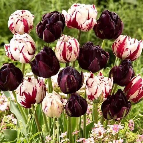 Суперпредложение! Комплект махровых тюльпанов Магия цвета изображение 1 артикул 67559
