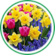 Тестирование - луковицы цветов Magic-box изображение 1 артикул 10695