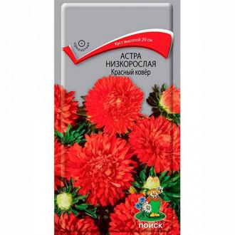 Астра Красный ковер Поиск изображение 1