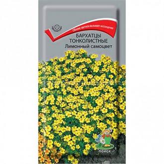 Бархатцы Лимонный самоцвет Поиск изображение 6