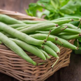 Фасоль спаржевая Гирлянда Premium Seeds изображение 7
