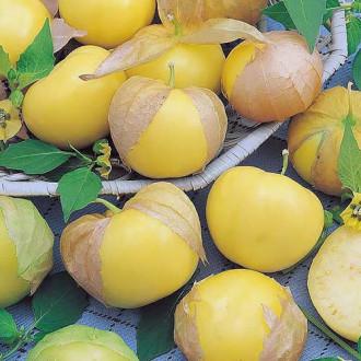 Физалис овощной Королек Седек изображение 3