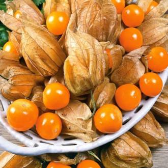 Физалис овощной Лакомка Седек изображение 5