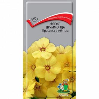 Флокс Друммонда Красотка в желтом Поиск изображение 5