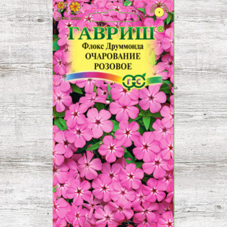 Флокс Друммонда Очарование розовое Гавриш изображение 3