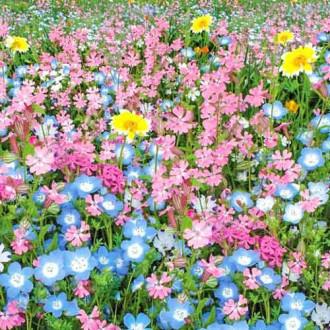 Газон цветущий Цветущий город, смесь окрасок Русский огород НК изображение 8