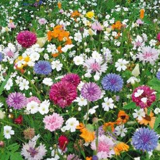 Газон цветущий Эко-Магистраль, смесь окрасок Русский огород НК изображение 4