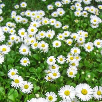 Газон цветущий майский луг Русский огород НК изображение 2
