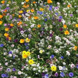 Газон цветущий Солнце Флоренции, смесь окрасок Русский огород НК изображение 1