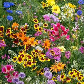 Газон цветущий Солнечная долина, смесь окрасок Русский огород НК изображение 6