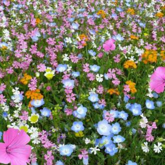 Газон цветущий Восточный орнамент, смесь окрасок Русский огород НК изображение 1