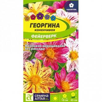 Георгина Фейерверк, смесь окрасок Семена Алтая изображение 2