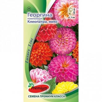 Георгина Клеопатра, смесь окрасок Premium Seeds изображение 7