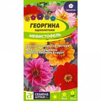 Георгина Мигнон, смесь окрасок Семена Алтая изображение 8