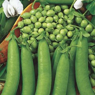 Горох Медовые бусы Premium Seeds изображение 4