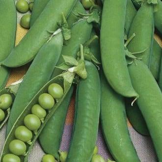 Горох Сладкий поползун Premium Seeds изображение 1