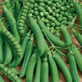 Горох Усатый барин Premium Seeds изображение 5
