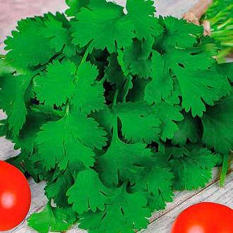 Кориандр Санто Premium Seeds изображение 7
