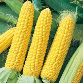 Кукуруза Кубанская консервная 148 Седек изображение 1