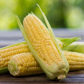 Кукуруза Сахарная королева Premium Seeds изображение 2