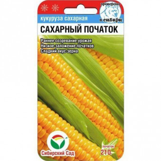 Кукуруза Сахарный початок Сибирский сад изображение 6