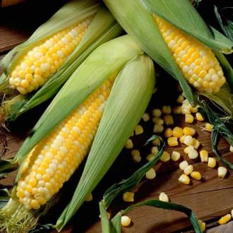 Кукуруза Сливочный нектар F1 Русский огород НК изображение 2