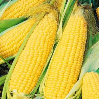 Кукуруза Тройная сладость Русский огород НК изображение 7
