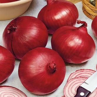 Лук репчатый Цыган Premium Seeds изображение 1