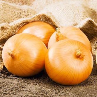 Лук репчатый Семейный хоровод Premium Seeds изображение 1