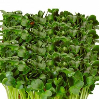 Микрозелень Дайкон Русский огород НК изображение 1