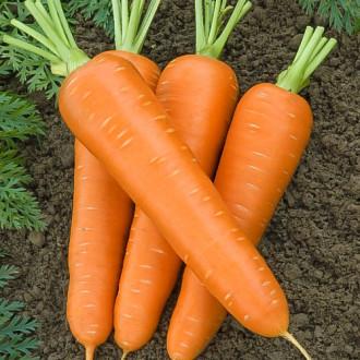 Морковь Бессердцевинная Королева Premium Seeds изображение 7