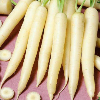 Морковь Чаровница сахарная Седек изображение 6