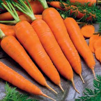 Морковь Королева осени Седек изображение 2