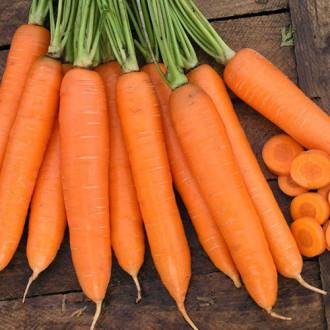 Морковь Красная звезда Уральский дачник изображение 7