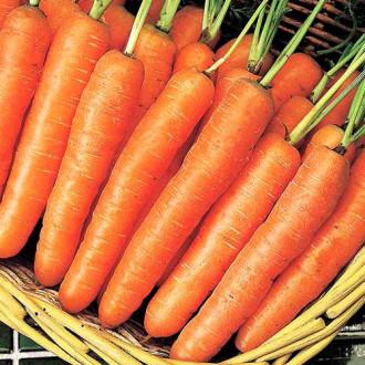 Морковь Крестьянка Седек изображение 6