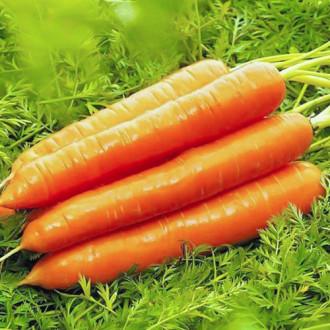 Морковь Медовая сказка Premium Seeds изображение 8
