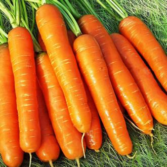 Морковь Нантская премиум Premium Seeds изображение 4